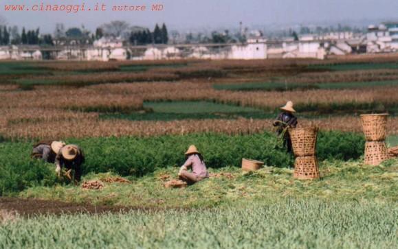 http://www.cinaoggi.it/geografia/yunnan/jpg/dali/003.jpg