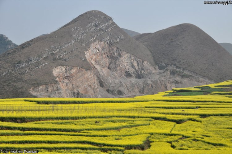luoping_flowers_yunnan_011