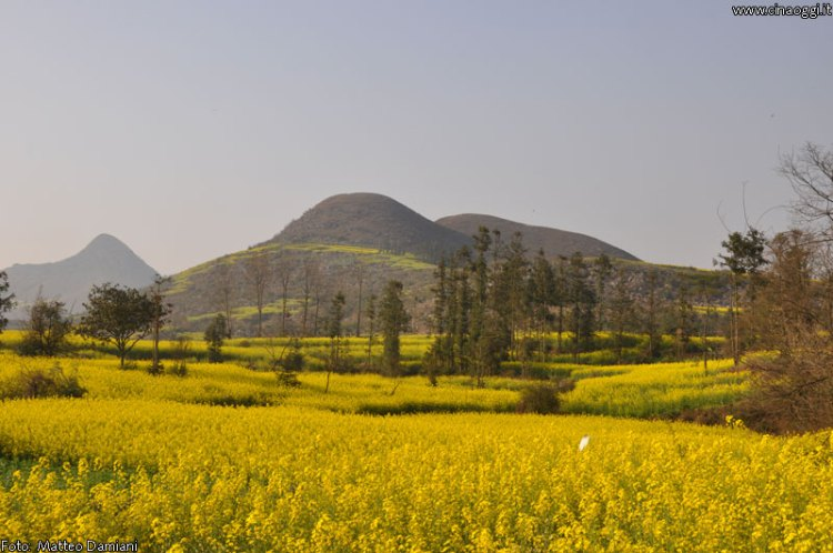 luoping_flowers_yunnan_021