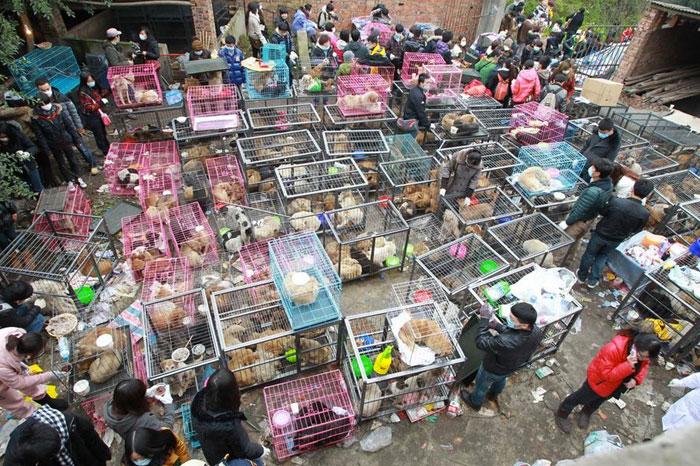 cani salvati in Cina