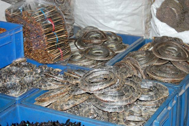 abusi animali medicina tradizionale cinese-serpenti