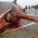 balena-001