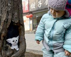 pittura sugli alberi