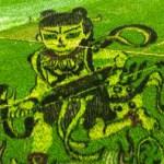 Le opere d'arte delle risaie in Cina