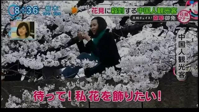 turisti cinesi tra i ciliegi in fiore in Giappone