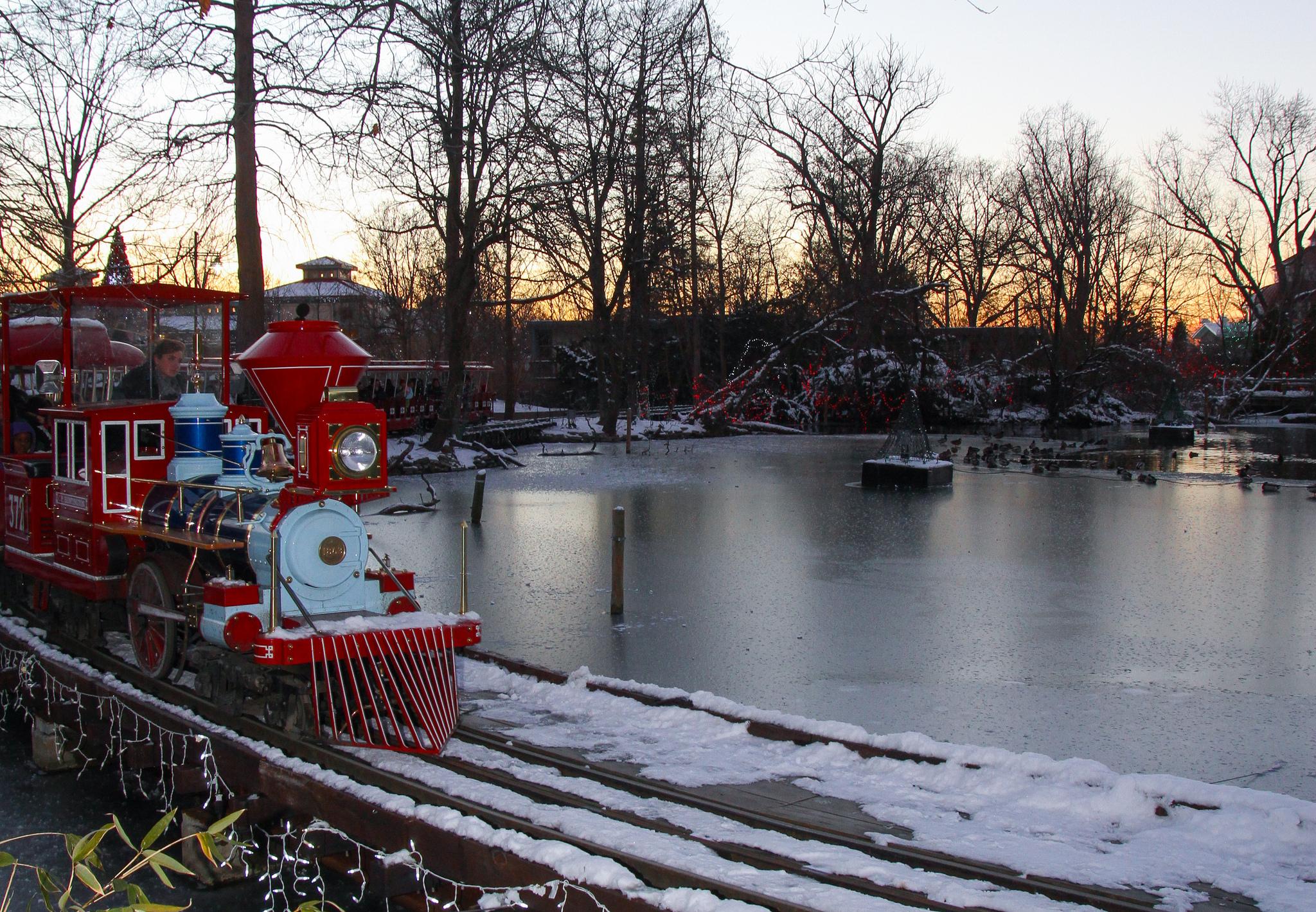 How Much Festival Lights Cincinnati Zoo