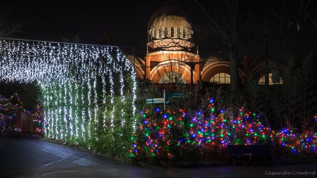 Cin Zoo Festival Lights