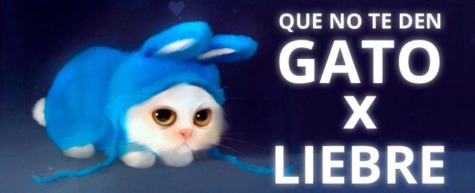 Gato x Liebre