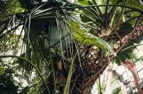 palms and ferns grown inside