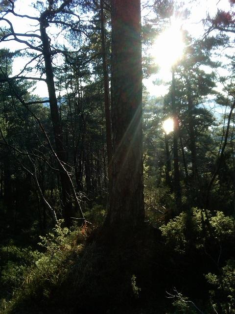 sunshine on the side of Løvstakken