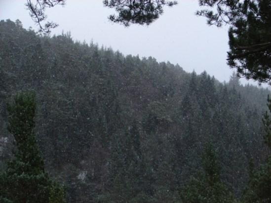 January 29, 2014 2:33 pm snow