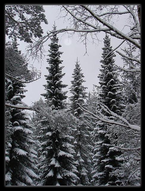 2009-12-19 12.28.01 - Langeskogen