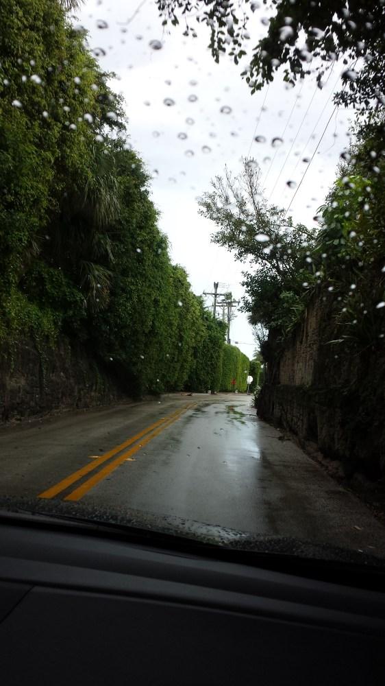 Palm Beach, FL...home of sculptured hedges. (3/6)