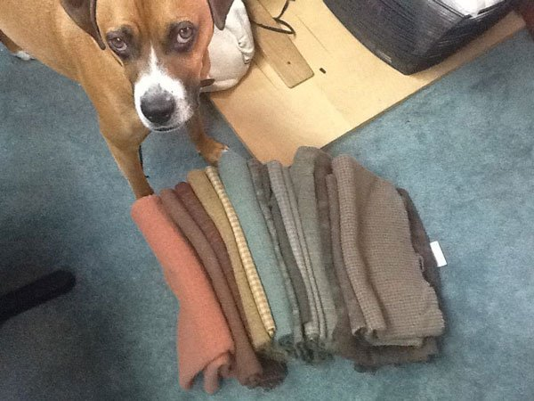 Jackson, the boxer mix, helping me choose colors.