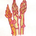 drawing of pink asparagus