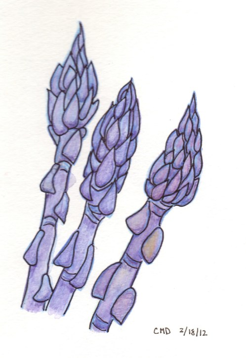 drawing of purple asparagus