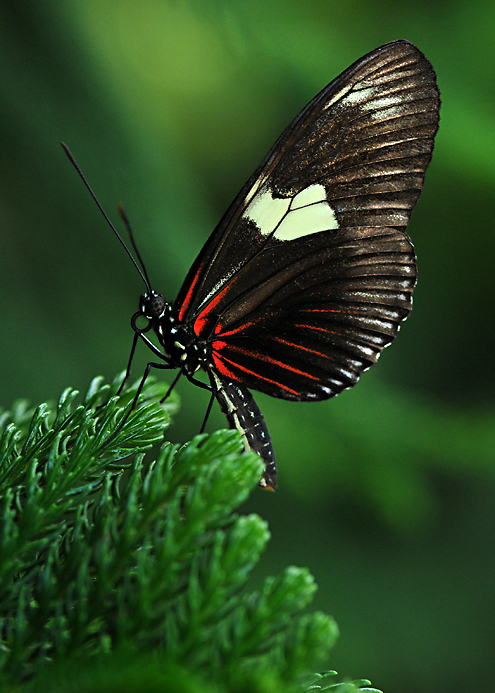 Butterflylorez