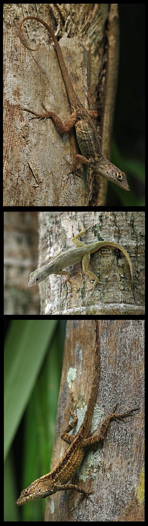 Lizard Camouflage