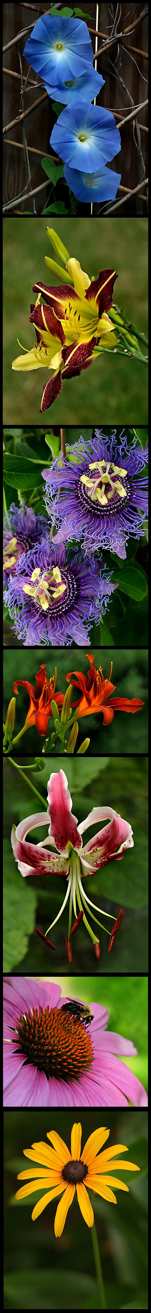 Blooms7172009