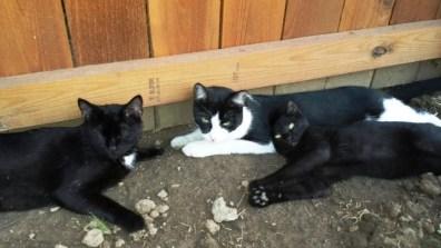 Border garden cats e