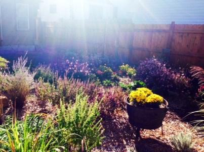 morning garden e