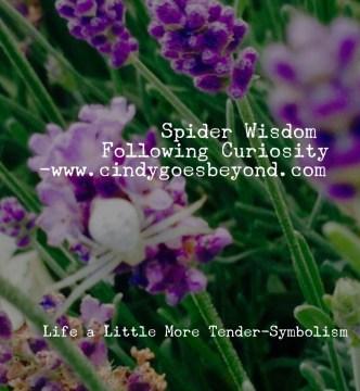 Spider Wisdom