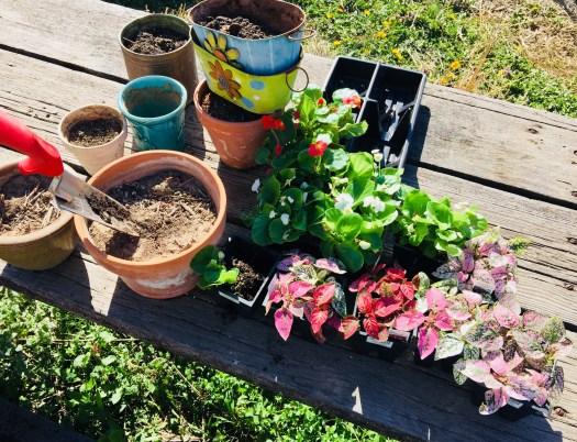 Gardening Meditation