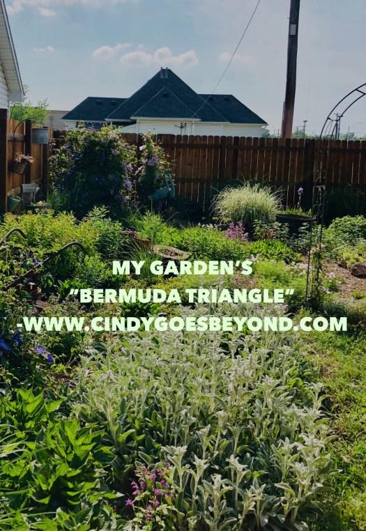 My Garden's Bermuda Triangle