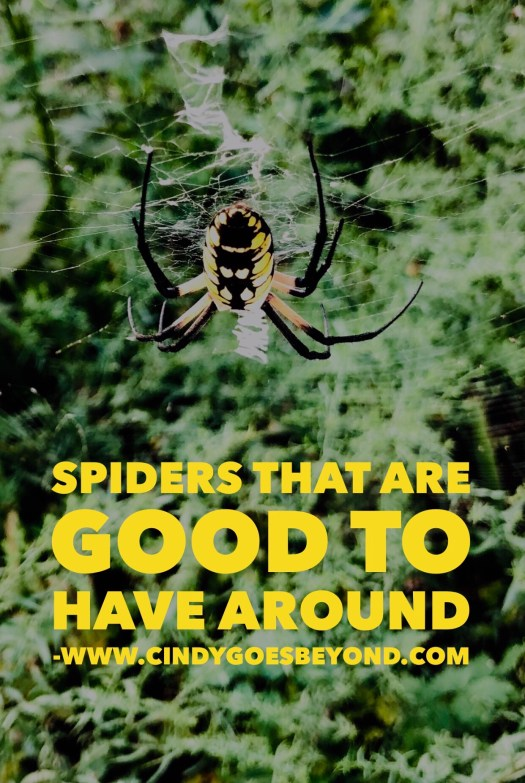 Spiders That Are Good to Have Around