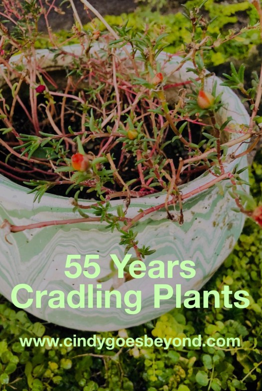 55 Years Cradling Plants