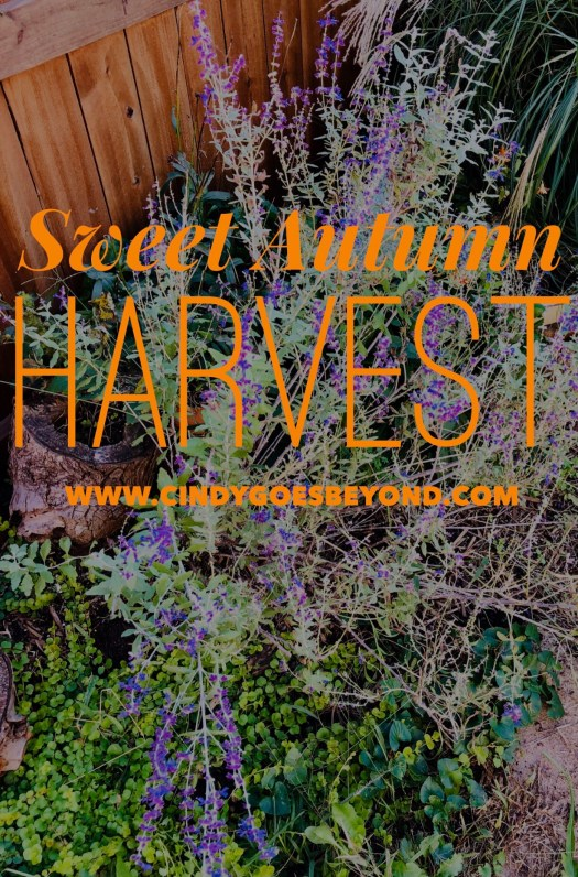 Sweet Autumn Harvest