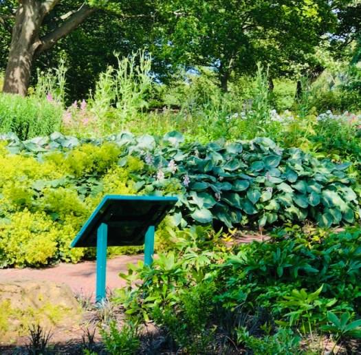 Royal Botanic Garden Pathway
