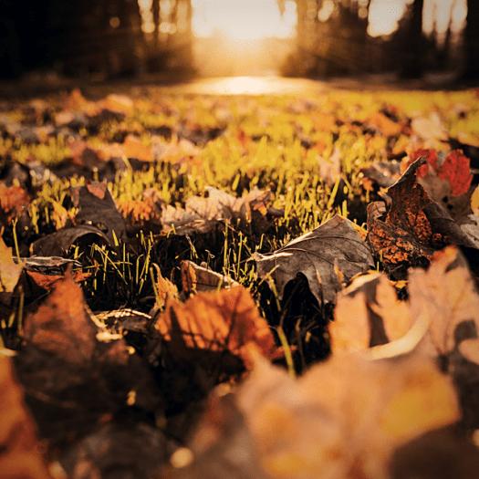Fall Checklist Rake Leaves