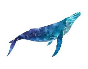 Mulitcolored Humpback