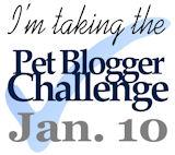 Pet Blogger Challenge 2012