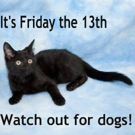 Fab Feline Friday the 13th: Black Cats Rule, Asti