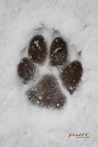 Pet Safety During Cold Weather