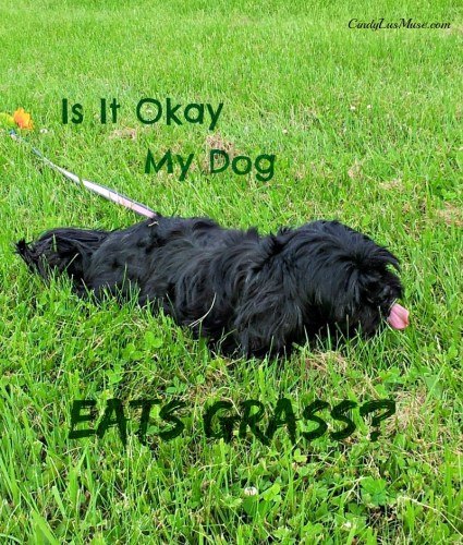 Is It Okay If My Dog Eats Grass