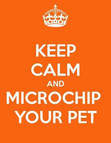 Check the Chip: Microchip Your Pet