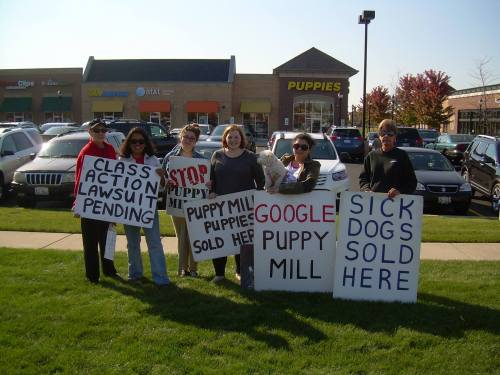 CAPS members protest pet stores selling from puppy mills
