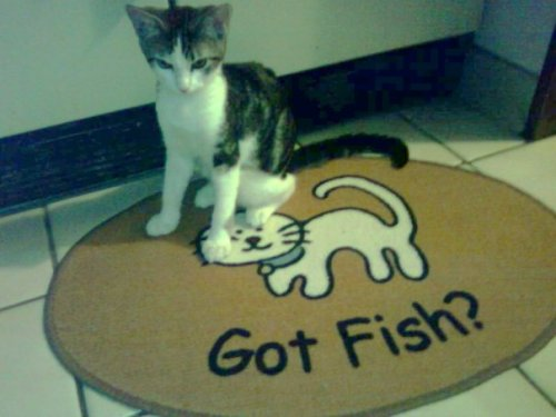 Cat on rug: Got Fish?