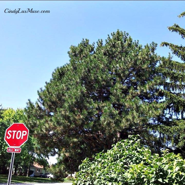 CindyLusMuse-Spirit-Tree-Above