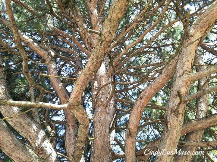 CindyLusMuse-Spirit-Tree-Looking-Up
