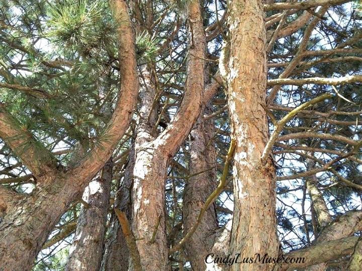 CindyLusMuse-Spirit-Tree