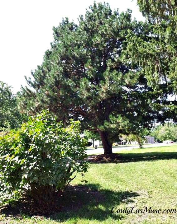 CindyLusMuse-Wisdom-of-a-Spirit-Tree