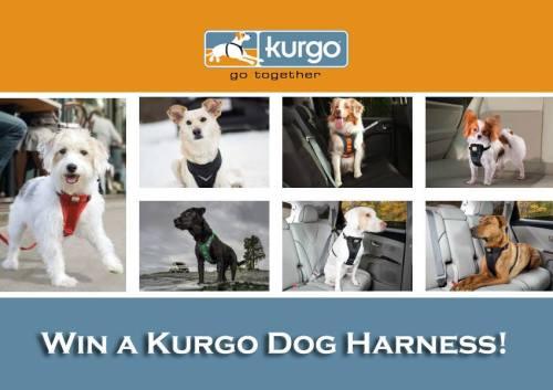 Kurgo Dog Harness Giveaway