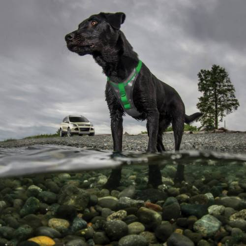 Kurgo Dog Harness Walking
