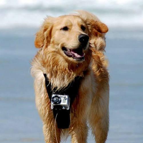 Kurgo Dog Harness at Beach