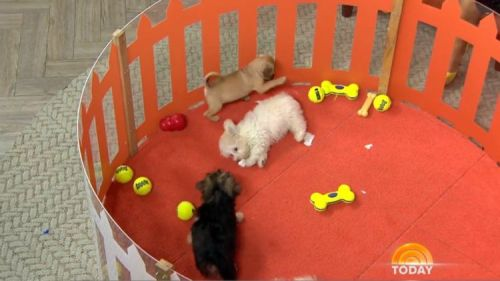 Party Puppies in a pen