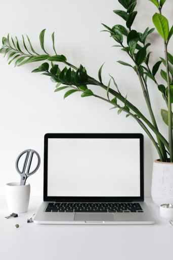 Cindy Jones - Content by Design - laptop on desk near lush houseplant